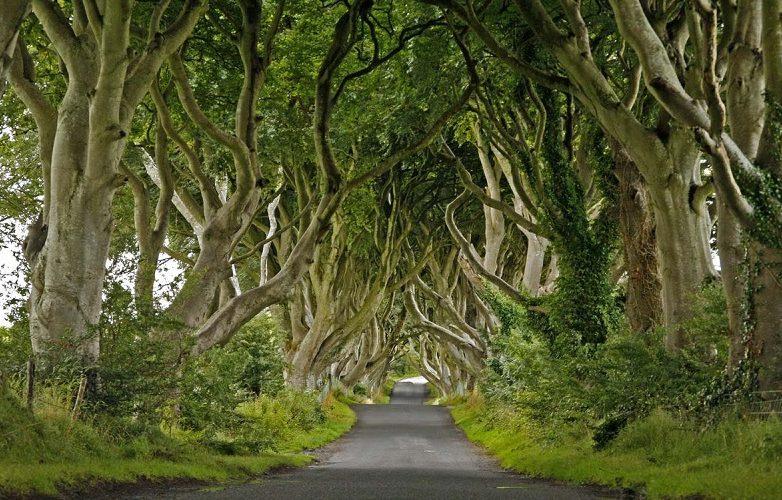 Fotos de Belfast Irlanda del Norte 9